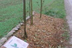 Création d'un Arboretum