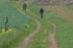 Entretien de sentiers de randonnée