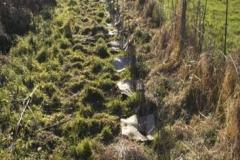 Plantation de marais